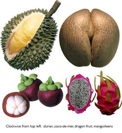 Fruitsamples_3